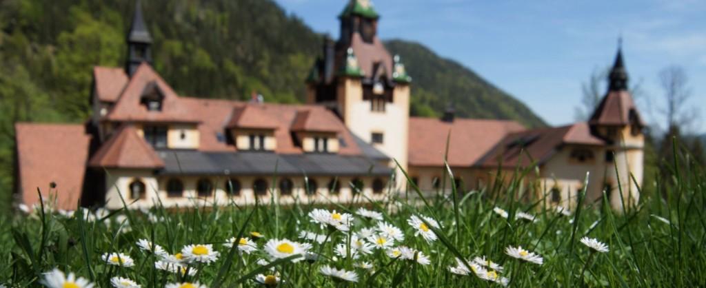 Schloss_Gänseblümchen_900x300